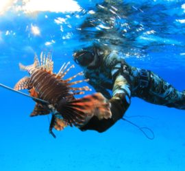 Ren Chapman spearfishing course lionfish Bahamas Hawaiian sling photo Ryan McInis