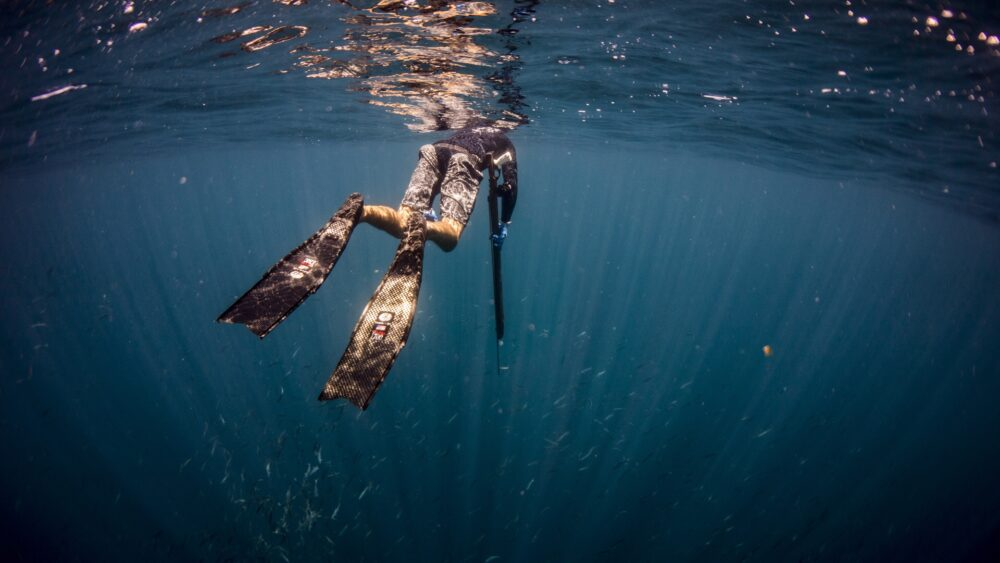 Spearfishing breathe up North Carolina